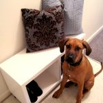 DIY Entryway Bench (Subtitled: I Can't Believe I Actually Built Something!)