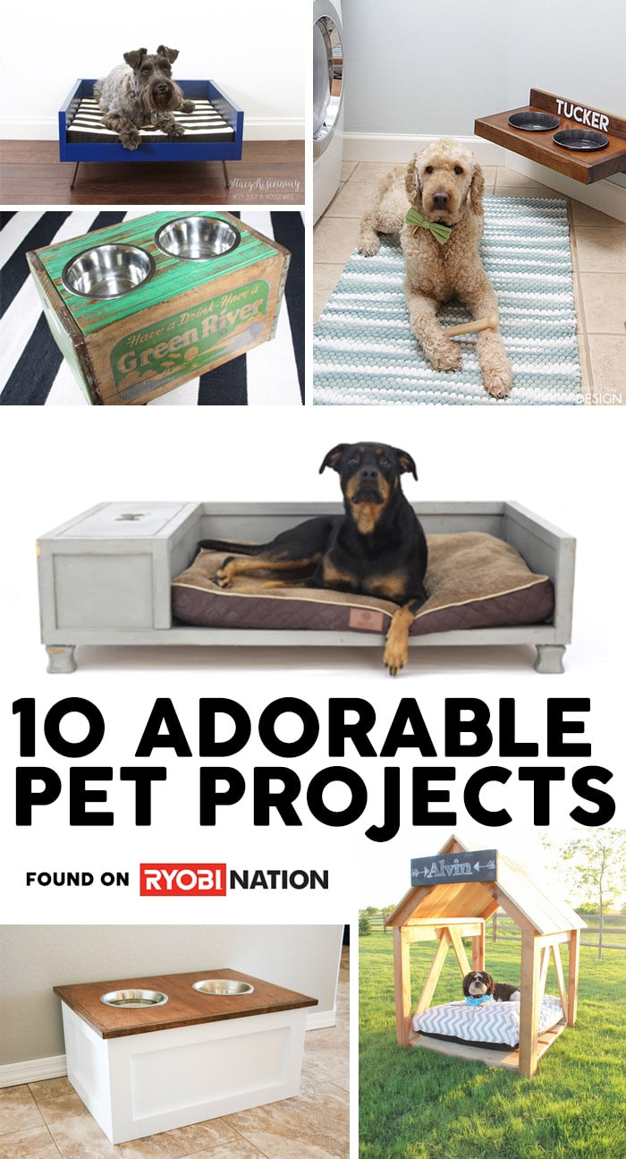10-diy-pet-projects