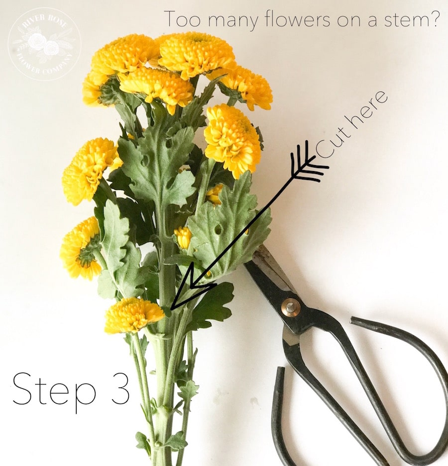 Floral design 101: Use 7 basic design principles to create the most beautiful bouquets.