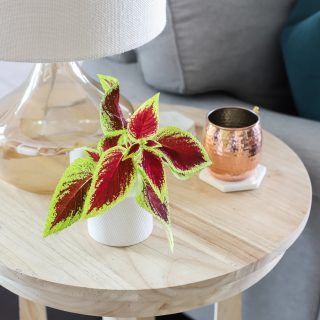 How to add a few simple touches to decorate for Fall