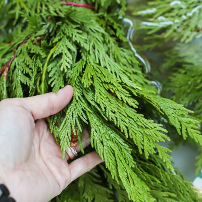 How To Keep Holiday Greenery Fresh
