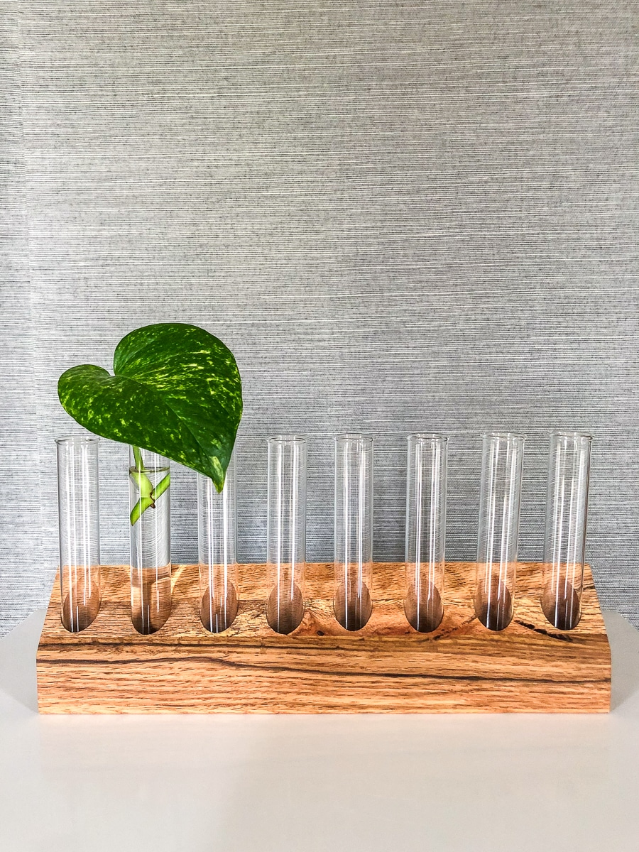 How to make a DIY plant propagation station test tube plants