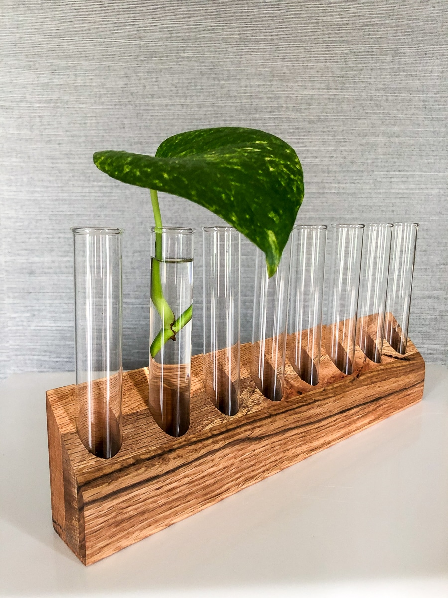 How to make a DIY plant propagation station with test tubes and scrap wood