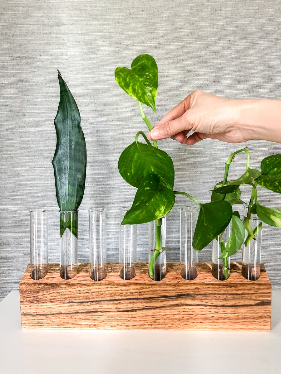 How to make a DIY plant propagation station out of scrap wood
