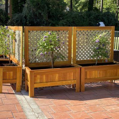 pool planters with trellis