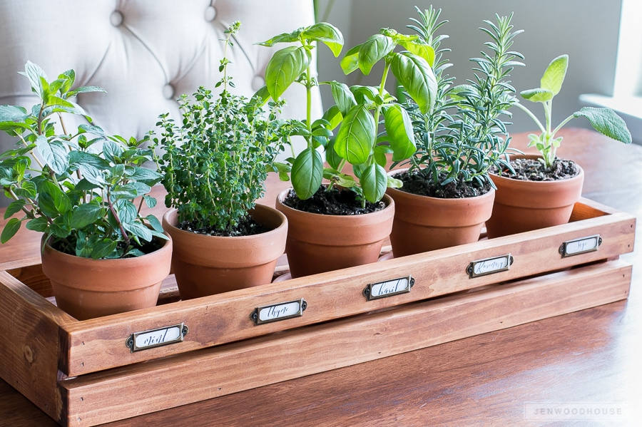 How to make a DIY herb garden
