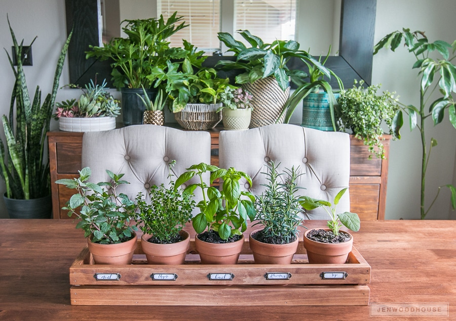 Bring the outdoors in for Spring with plants and a fresh herb garden